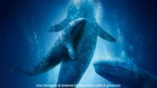 Qualcosa di straordinario:  Trailer Italiano