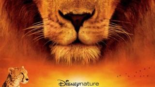 African Cats - il Regno del Coraggio:  Trailer Italiano