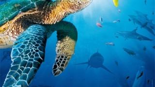 Oceani 3d:  Trailer Italiano