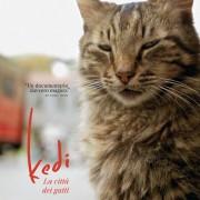 Kedi. la Città dei Gatti