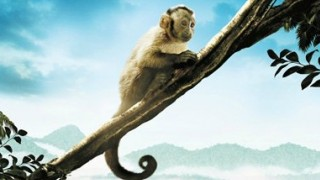 Amazzonia:  Trailer Italiano